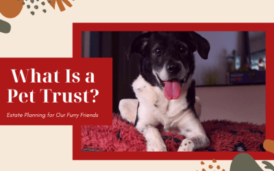 What Is a Pet Trust & Do I Need One?