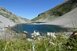 Lago di Pilato e stelle alpine