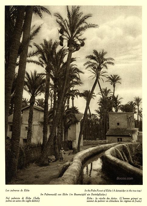 palmeras de Elche
