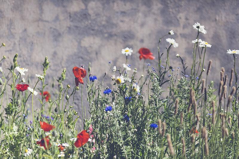 flores rojas azules www.bodasdecuento.com