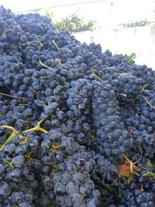 full grapes