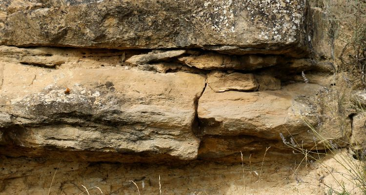 Soils