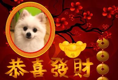 Bodhi Me Chinese New Year 2018 Oreo