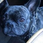 Corto…the new BODIE and FOU's mascot!