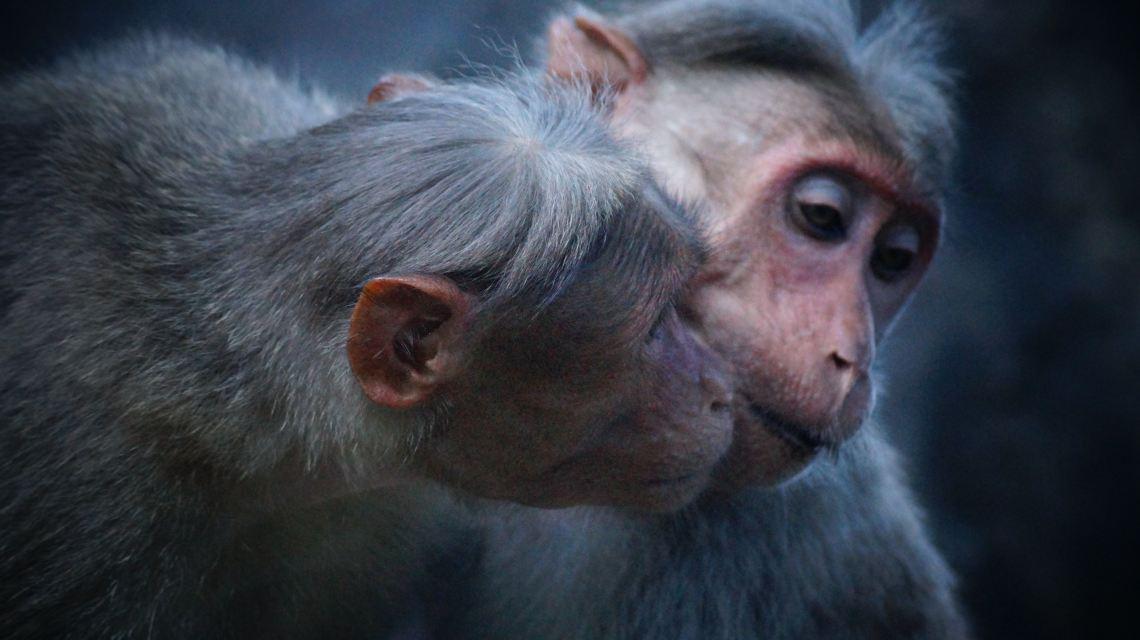 apekatter-seksualmoral-jobb