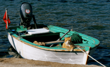 Ginger Cat at Gumusluk Harbour and Boat Bodrum Turkey