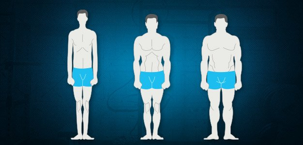 Image result for images body type
