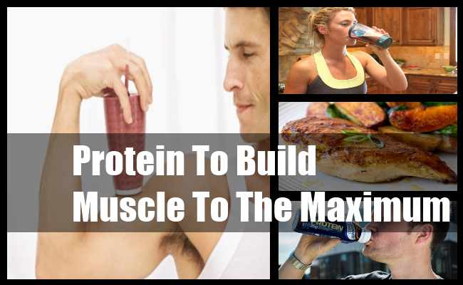 Protein To Build Muscle To The Maximum