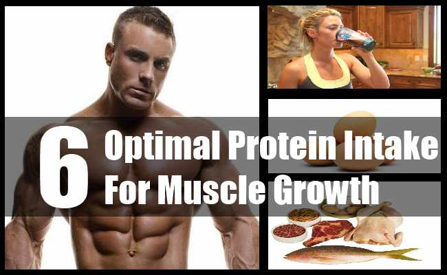 Optimal Protein Intake For Muscle Growth