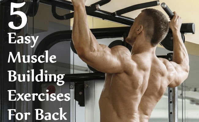 Easy Muscle Building Exercises For Back