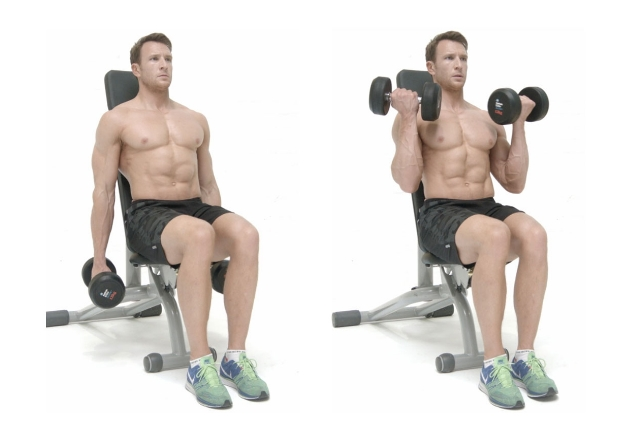 Bicep Curls Seated