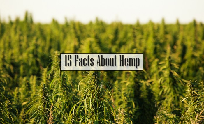 15 Facts About Hemp