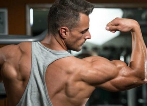Best Testosterone Boosters