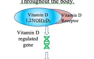 La deficiencia de vitamina D y la contaminación del aire exacerban el COVID-19 mediante la supresión del péptido antiviral LL37