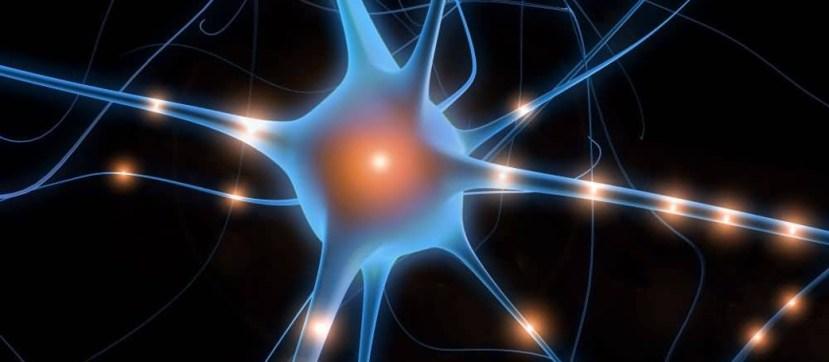 disinibizione neurale