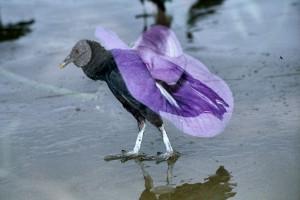 Doppelbelichtung: Vogel und Pflanze
