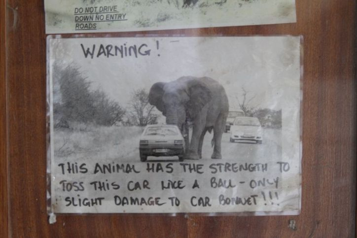 Elefant und Autos