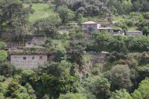 Ort Sykaminea