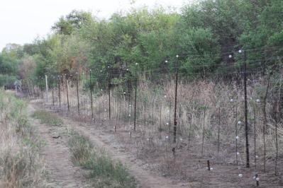 Grenzzaun: Die untere Leitung vor dem Zaun dient zur Abwehr der Warzenschweine
