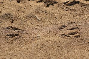 Kröten / True toads / Bufonidae