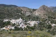 Pinos de Valle
