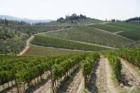 Weingut umgeben von Weinbergen