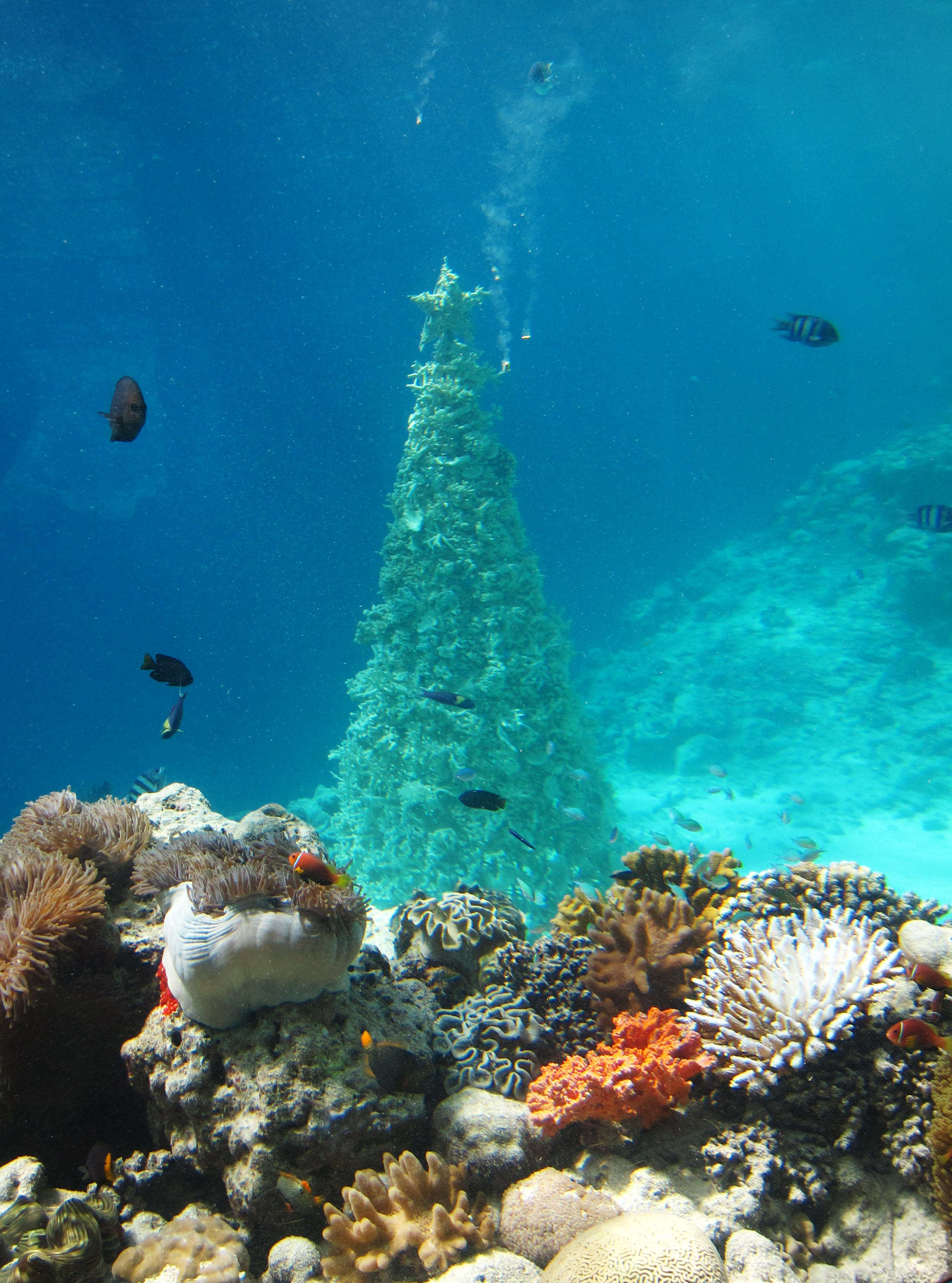 Christmas tree in the ocean made from coral
