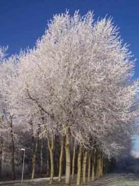 winter20074
