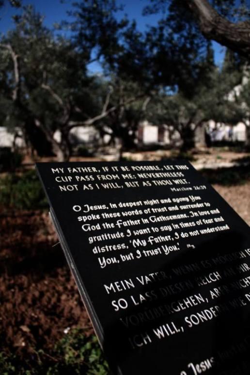 israel-web-19.jpg