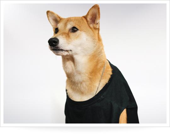 menswear-dog-gym-outfits_1429805683