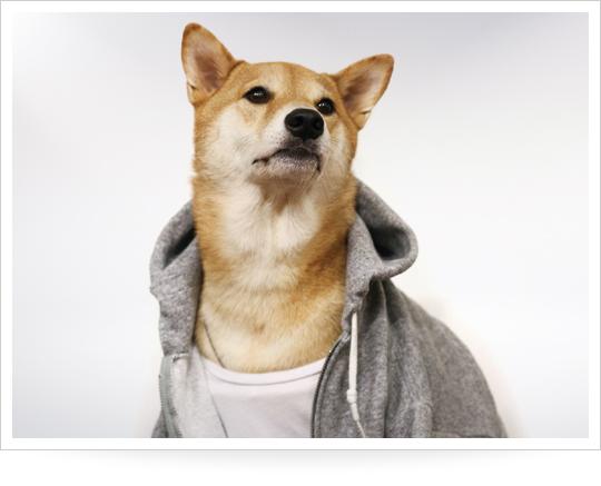 menswear-dog-gym-outfits_1429805778