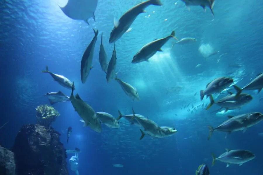 Bezoek het aquarium in Istanbul