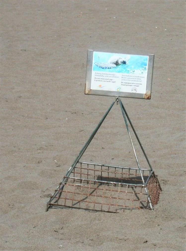 Schildpadden in Turkije