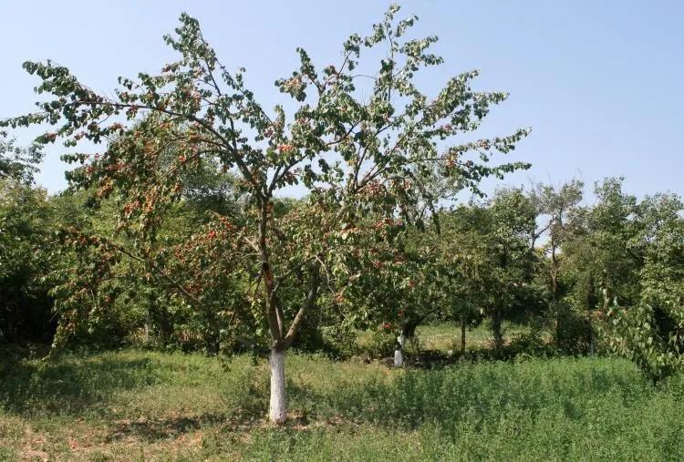 Groente en fruit in Bulgarije
