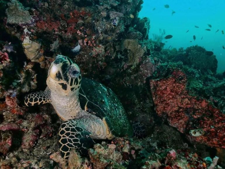 Onderwaterleven in Indonesië