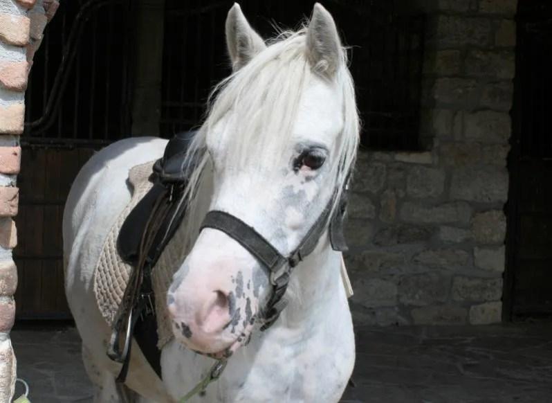 Mooi paard bij Kalimanski Han in Bulgarije