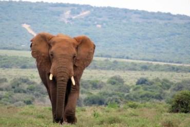 Zuid-Afrika – De favoriete bestemming van Annick van Our World Heritage