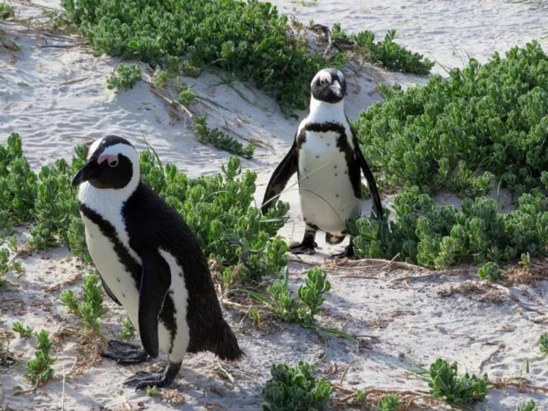Wildlife in Zuid Afrika