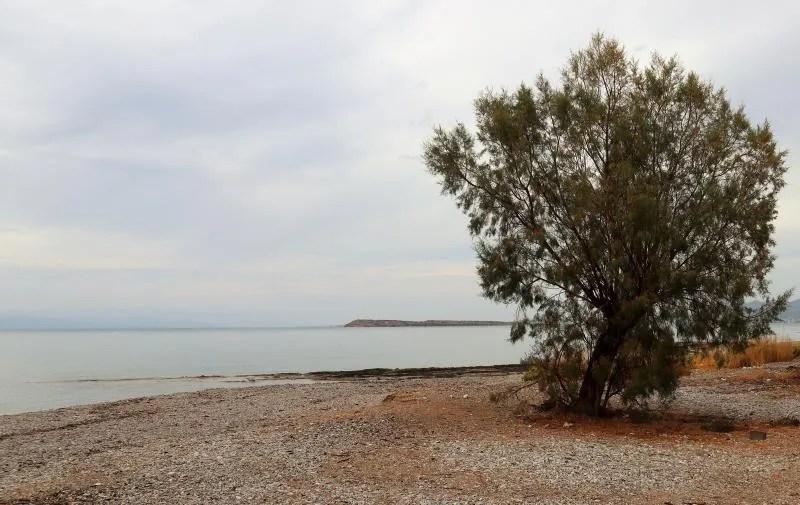 Boom op het strand van Agistri