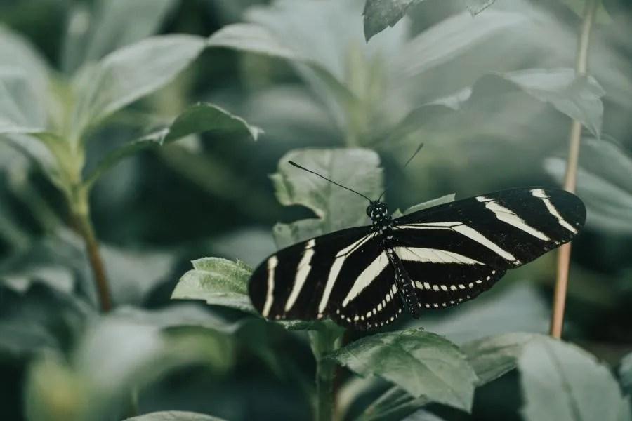 De Vlinderkas in de Hortus Botanicus