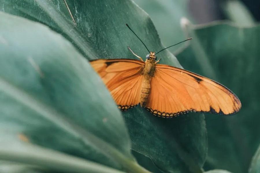 Vlinders in de Hortus Botanicus