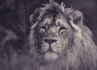 10 krokov k vybudovaniu mentálnej sily bojovníka