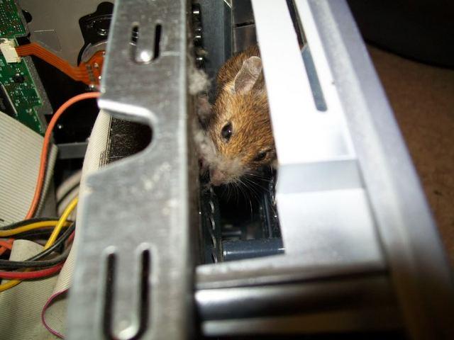 mousepc2.jpg