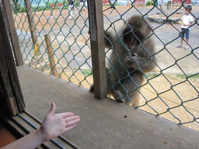 Arashiyama-Monkeys-16-1