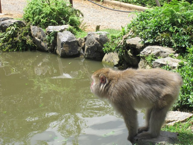 Arashiyama-Monkeys-23