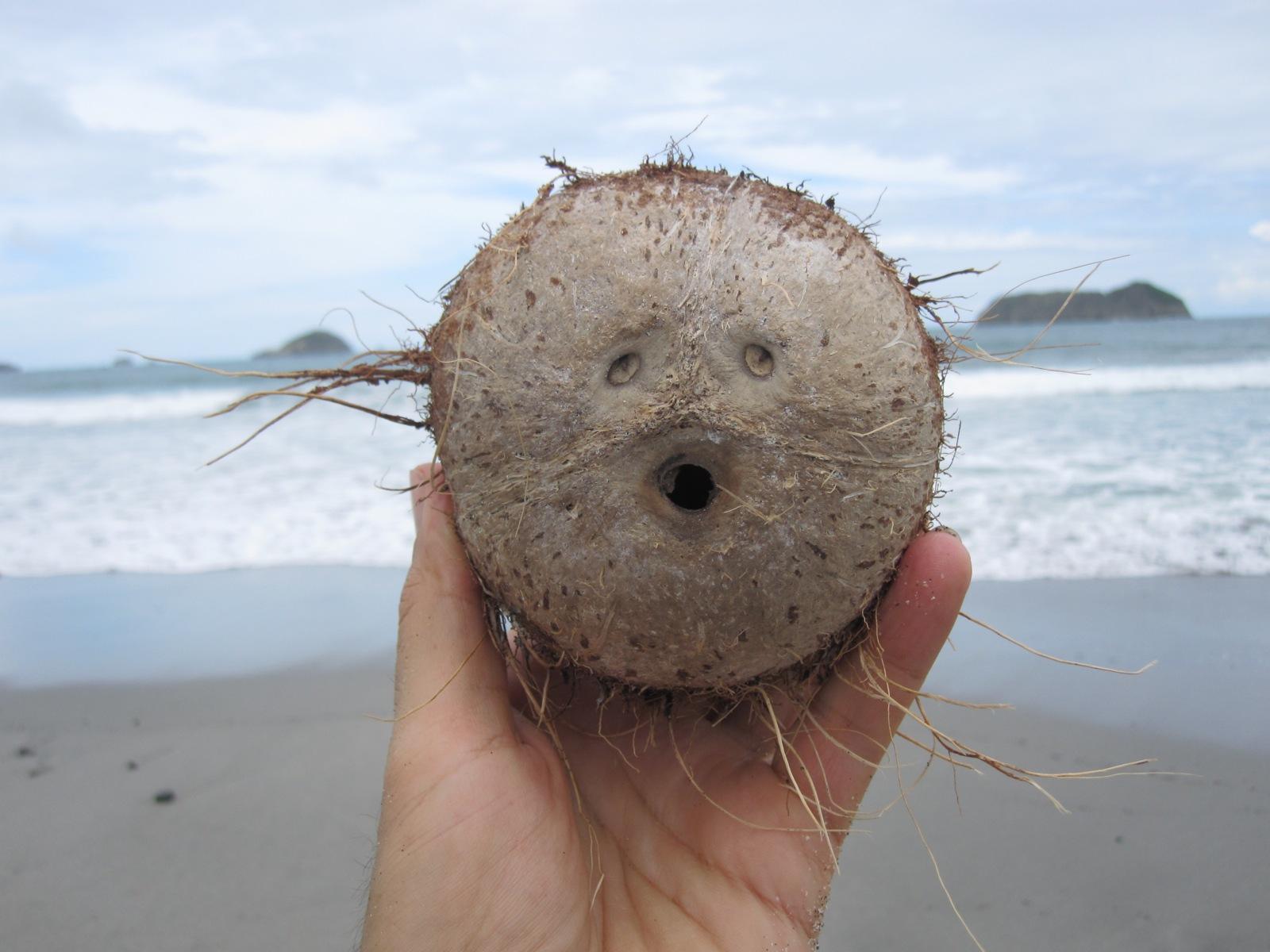 Для, смешные картинки с кокосом