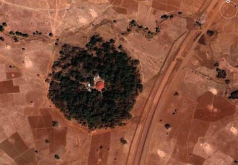 aerial-forest-480.jpg