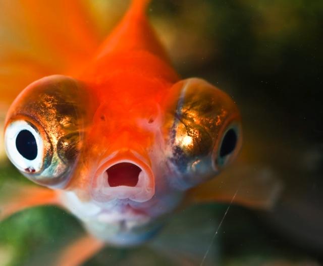 shockedfish.jpg