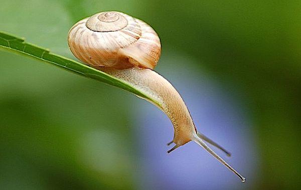 snailsayswoah.jpg