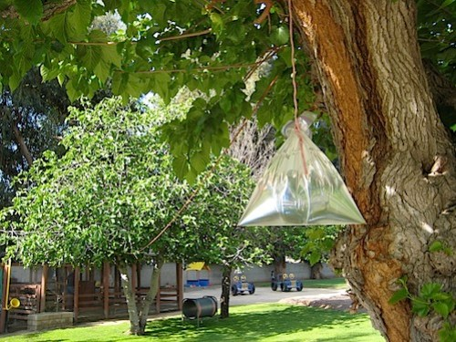 water-bag.jpg